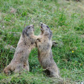 Il Progetto GESTIRE incontra gli Enti Gestori dei siti Natura 2000
