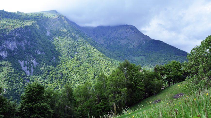 Un LIFE per la #biodiversitàinlombardia
