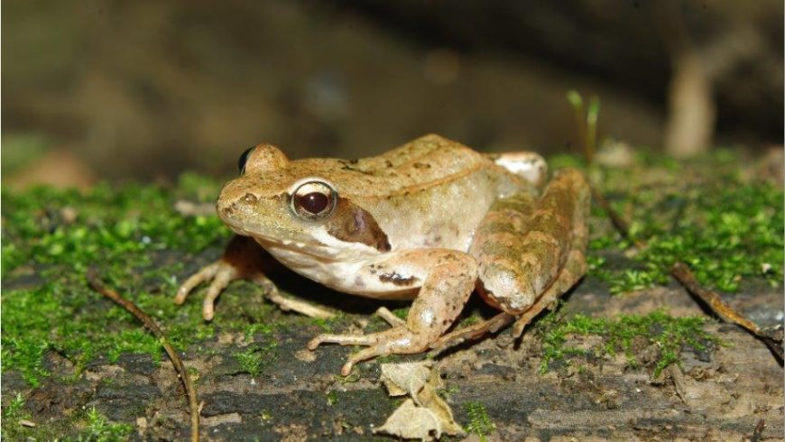 Actions for amphibians and reptiles