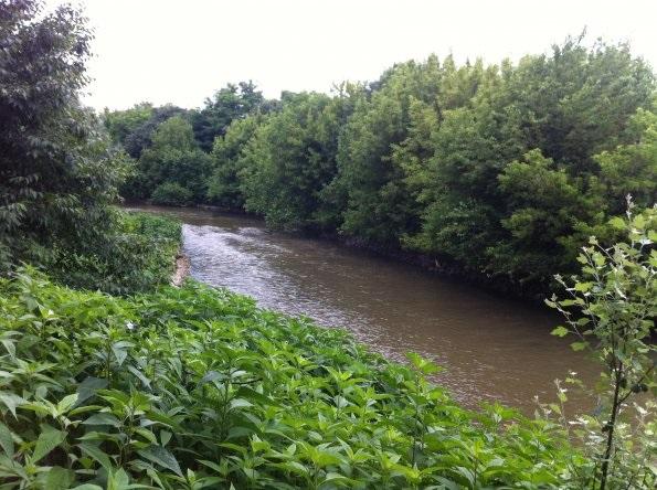 """Fondo Aree verdi: pubblicato il bando """"Infrastrutture verdi a rilevanza ecologica e di incremento della naturalità"""""""