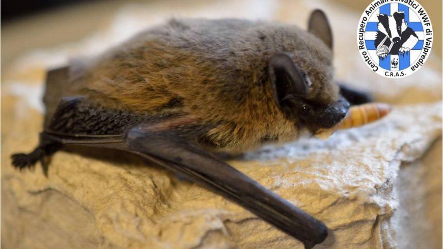Lo Sportello Pipistrelli su Radio Popolare