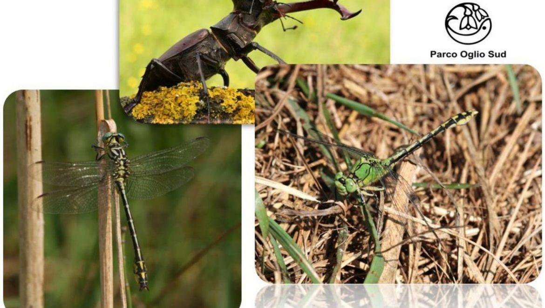 Incontro di formazione per volontari, Gev e appassionati su monitoraggio di invertebrati in Direttiva Habitat