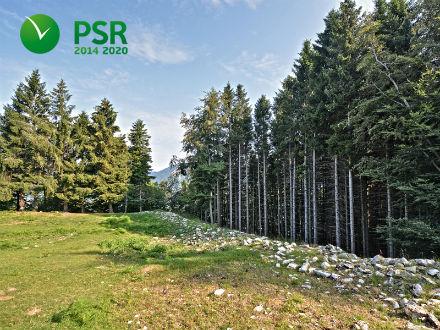 Prevenzione dei danni alle foreste: attivata la Misura 8.3.01 del PSR