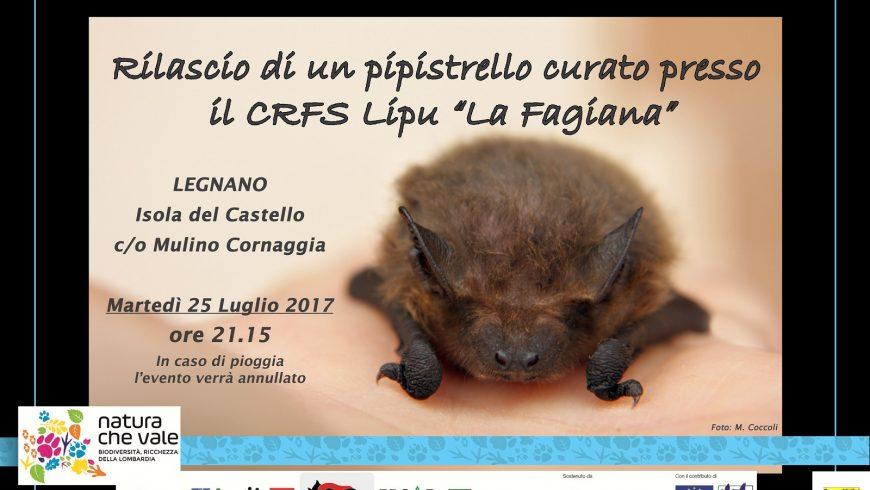 """Rilascio pipistrello curato dal CRFS Lipu """"La Fagiana"""""""