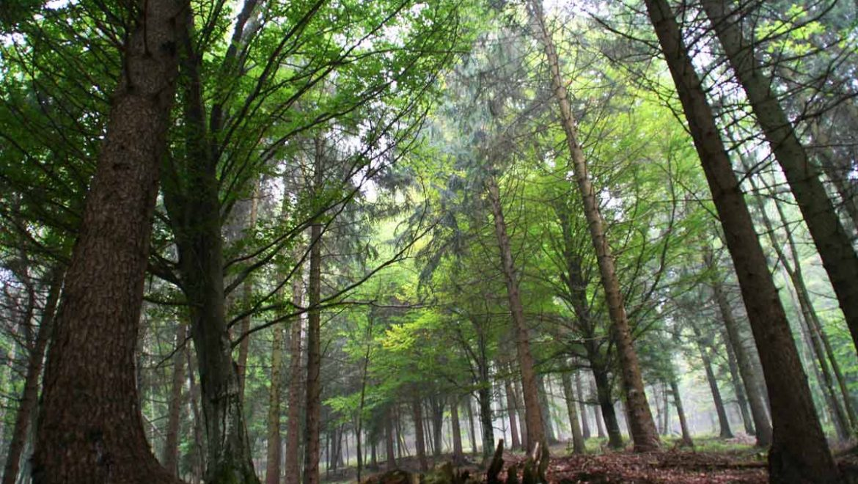 Forestazione e imboschimenti: aperto il bando della Misura 8.1 del PSR