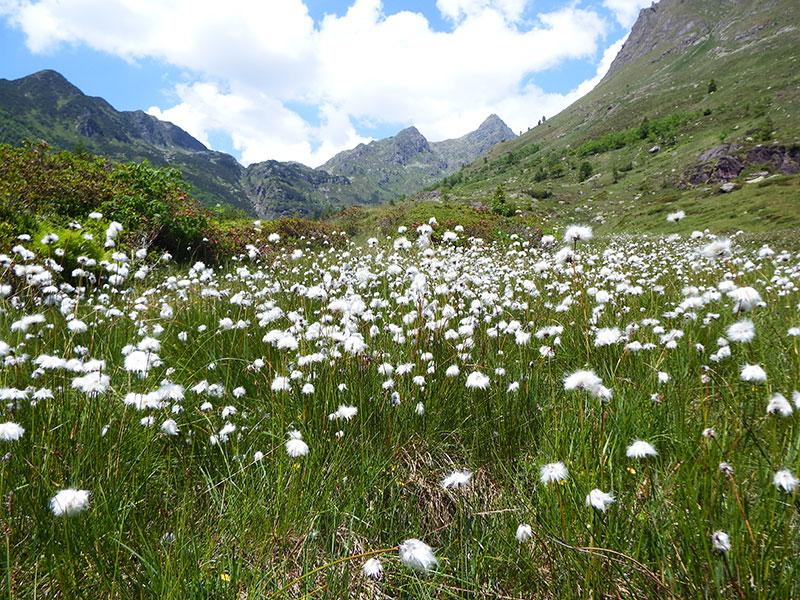 Contributi regionali per la biodiversità a favore degli enti parco