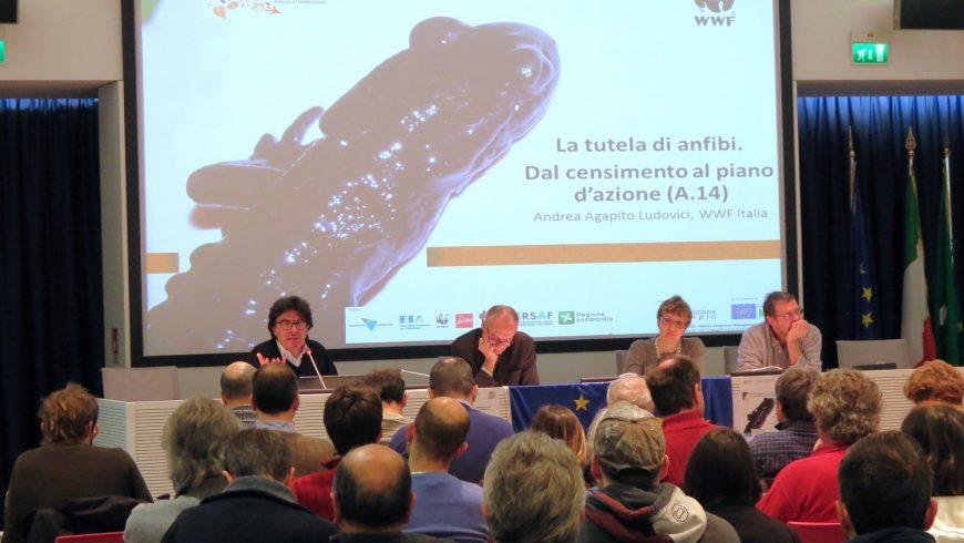 Disponibili on line i materiali degli Stati Generali per la conservazione degli anfibi e rettili in Lombardia