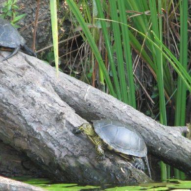 Foreste, biodiversità e risorse idriche: nuovi bandi del PSR per il 2018