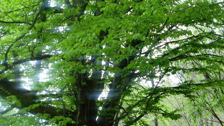 Bando per la resilienza dei sistemi forestali