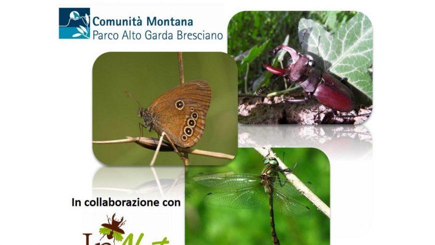 Le specie di insetti protetti in Regione Lombardia e nel Parco Alto Garda Bresciano