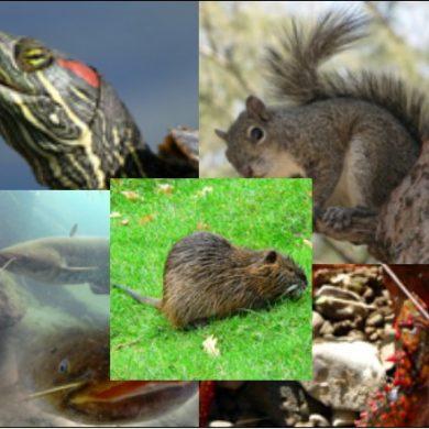 Quanto conosci le specie invasive? Partecipa al sondaggio e aiutaci a migliorare l'informazione