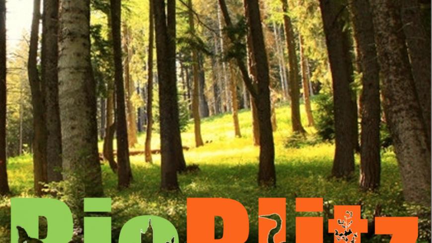 BioBlitz: esploratori della biodiversità per un giorno – Lombardia