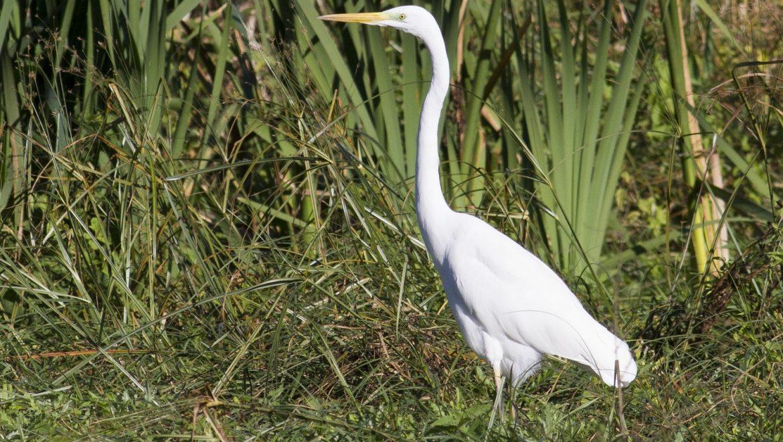 Mantenere e incrementare le connessioni ecologiche in attuazione della Rete Ecologica Regionale – Bigarello (MN) – 10 maggio