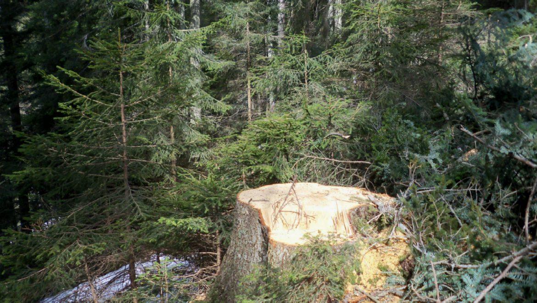 Danni da incendi, vento, gelo e neve: pubblicato il bando PSR per la conservazione e il ripristino delle foreste