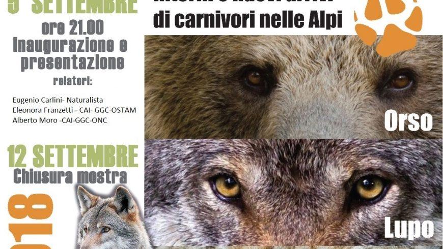 Presenze Silenziose: ritorni e nuovi arrivi di carnivori nelle Alpi – Carnago (VA)