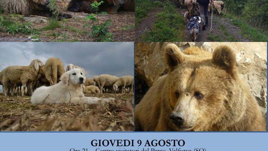L'orso bruno sulle Alpi e nel Parco dello Stelvio – Valfurva (SO)