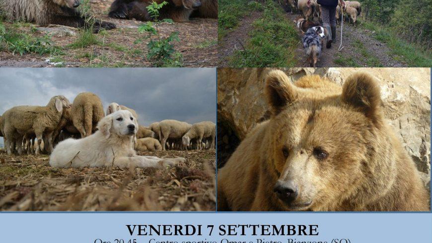L'orso bruno in Valtellina: tra conservazione e gestione – Bianzone (SO)