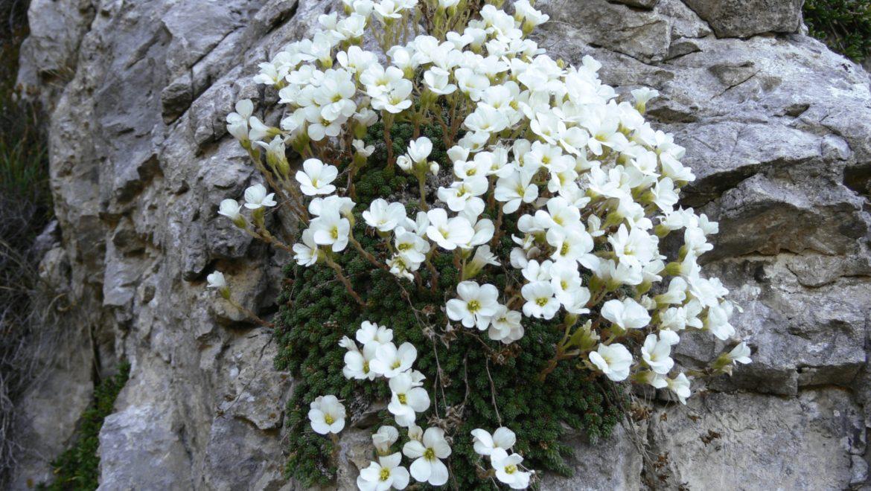 Presentazione SIVIC e piani d'azione su flora, chirotteri e anfibi