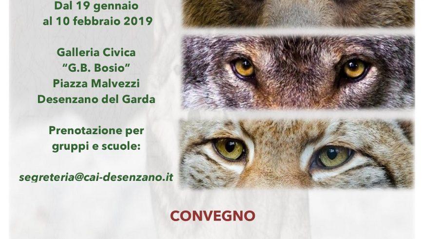 Presenze silenziose: ritorni e nuovi arrivi di carnivori nelle Alpi – Desenzano del Garda (BS)