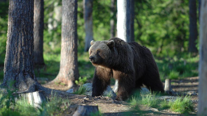 Presenze Silenziose: il ritorno dei grandi carnivori nelle Alpi – Cinisello Balsamo (MI)
