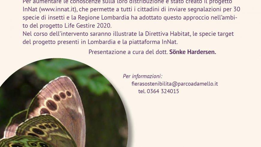 Gli insetti protetti dalla direttiva habitat: come riconoscerli e segnalarli – Breno (BS)