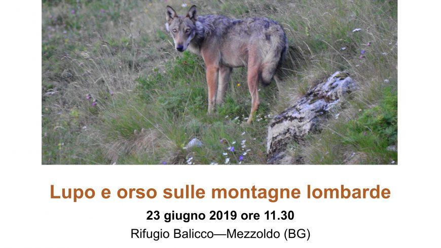 Lupo e orso sulle montagne lombarde – Rifugio Balicco, Mezzoldo (BG)