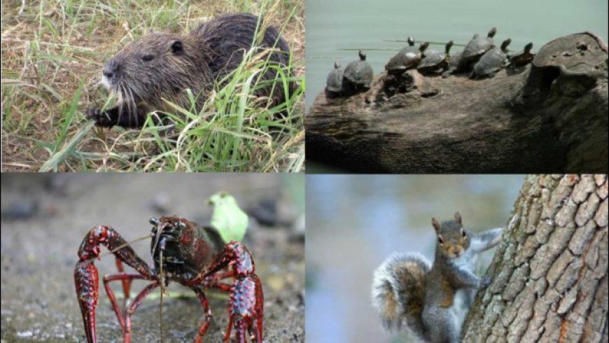 Corso di formazione su specie aliene invasive, 16 e 17 settembre a Milano
