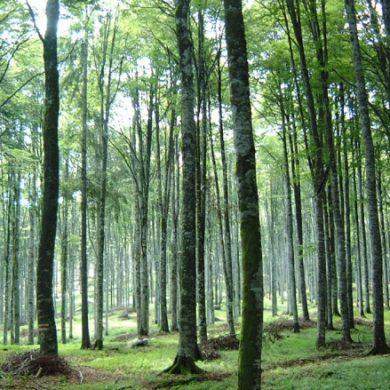 6 milioni per la realizzazione di nuovi boschi e il miglioramento di quelli esistenti. Aperto il bando di Regione Lombardia