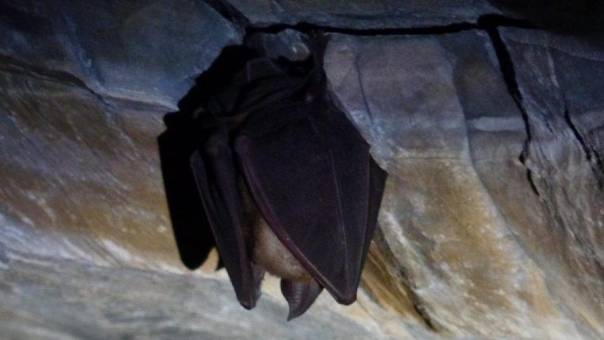 La vita nelle grotte: pipistrelli ed altri abitanti – Bergamo