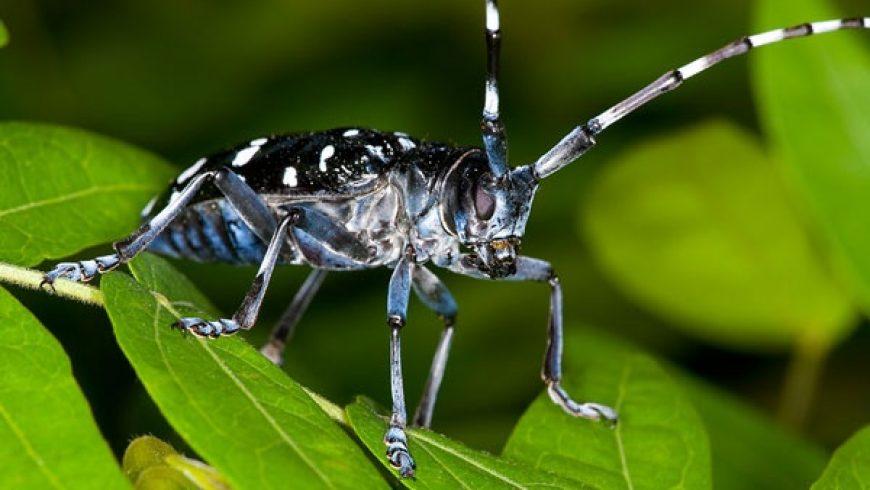 Specie aliene invasive: Regione Lombardia aggiorna liste nere di flora e piccola fauna
