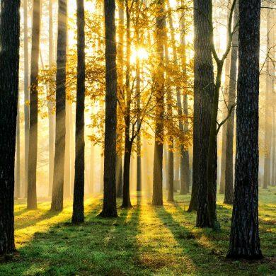 Prorogati termini del bando per la realizzazione di nuovi boschi e il miglioramento di quelli esistenti
