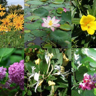 Codice di comportamento per florovivaisti ora disponibile anche in versione semplificata