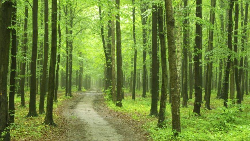 Bando di 18 milioni euro per interventi di prevenzione dei danni alle foreste (op. 8.3.01 PSR)