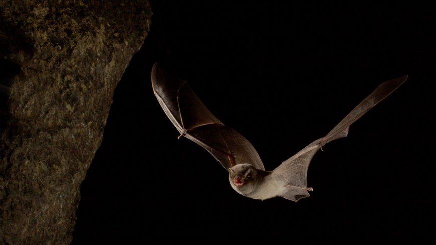 Il risveglio dei nostri pipistrelli: perché è importante tutelarli
