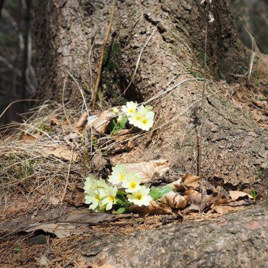 Questionario online su Rete Natura 2000, foreste e opportunità di finanziamento