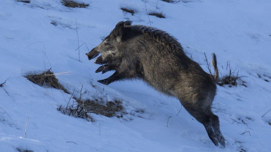 Contributi per la prevenzione dei danni da fauna selvatica in Lombardia – Online