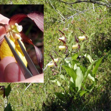 Orchidee: azioni per la loro conservazione